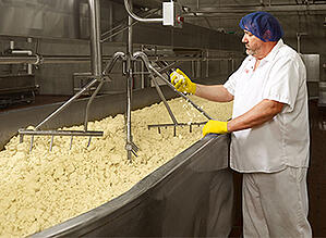 Baker Cheese Master Cheesemaker Jeff LeBeau feels cheese curd in his hand as it mixes in a vat in the Baker Cheese factory.